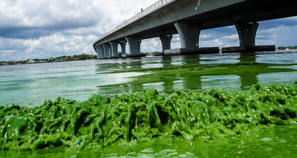 Toxic algae blooms in Fl. linked to too much fertilizer and to climate change